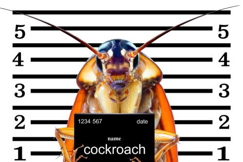 a mugshot of a cockroach